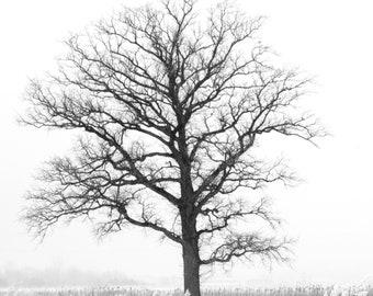 5x5 black and white tree print, dreamy nature print