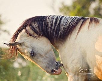Horse Photography,  Western Decor, horse photography, Close up horse portrait, fine art equine photography, Horse Print, Horse Picture