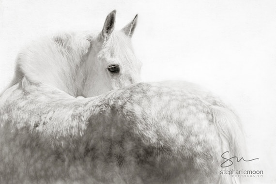 Gray Horse Looking Over Shoulderblack And White Horse Etsy