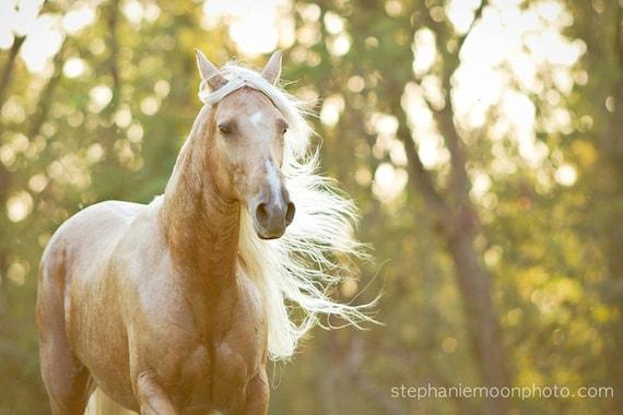 Fine Art Horse Photography Obraz Konia Palomino Etsy