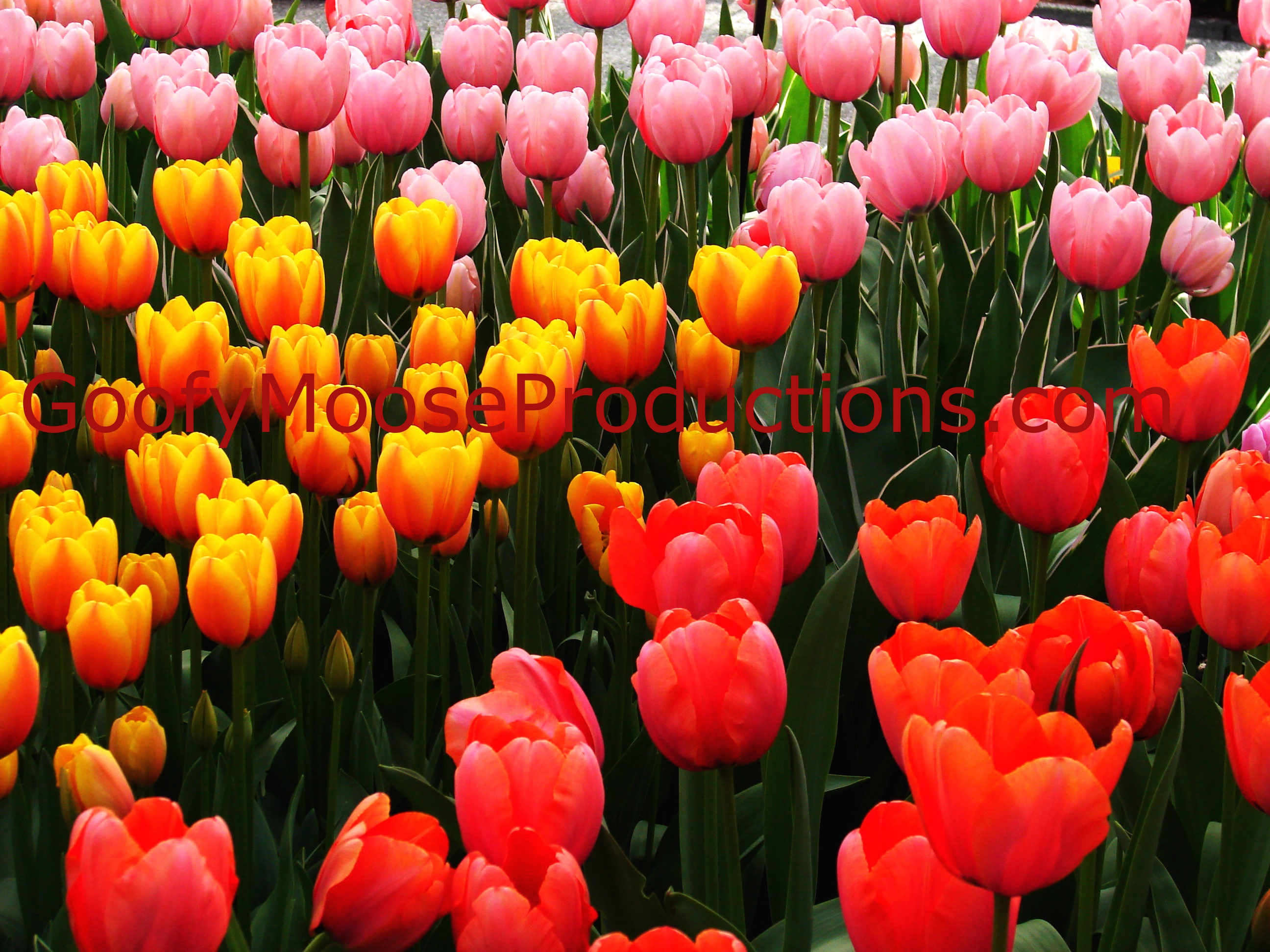 Pink Yellow And Red Flowers Photo Instant Download