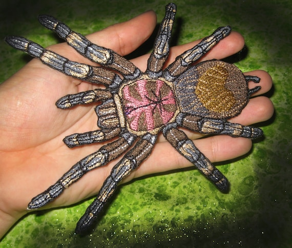 Chilean Rose Hair Tarantula Grammostola Rosea Spider Iron On Etsy