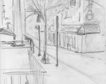 Brooklyn Neighborhood - Young Oak Tree - University - print of original pencil drawing - 8x10 inches