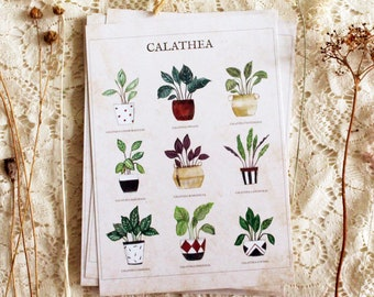 Postcard -botanical - plant - A6 - Calathea