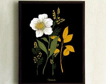 "Art Print - Poster - Botanical drawing - botanical - flower - herbarium - Flora - ""Hellebora and mimosa"""