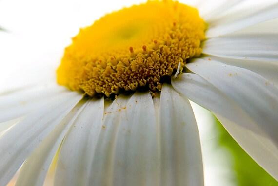 Mae Flower