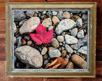 Nature Photography of a Red Autumn Leaf Along a Rocky Adirondack Riverbed