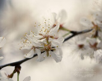 Flower Photography, Dreamy Decor, Farmhouse Style, Fine Art Print, Cherry Blossoms, Spring Photo, Photograph, Bedroom Decor, White, Beige