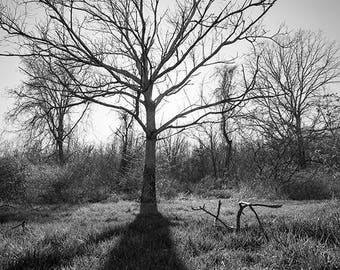 Tree Photograph, Rustic Home Decor, Landscape Photography, Fine Art Print, Photo of Trees, Black and White, Adirondacks, Spring Picture