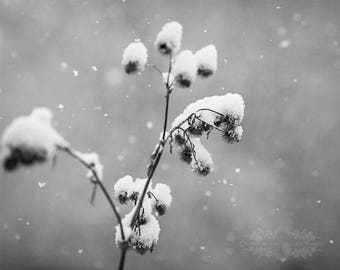 Rustic Photography of Seed Pods in a Snow Storm