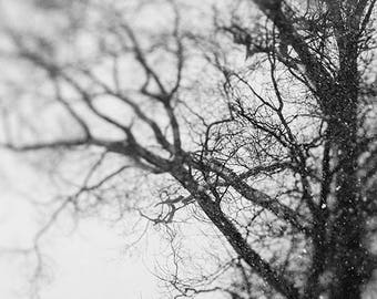 Rustic Nature Photography of A Tree in the Winter