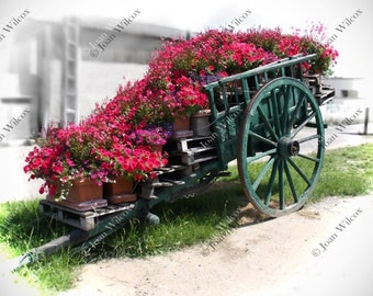 Spring Summer Loire Valley Flower Cart Tours, France Color Splash Floral Fine Art Photography Photo Print