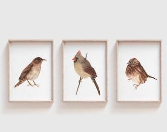 Set of Three Brown Bird Art Prints - Rustic Bird Illustrations - Song Sparrow, Female Cardinal, & House Wren Wall Art - Gift for Bird Lovers
