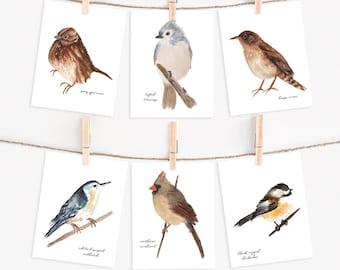 Assorted Bird Note Card Set - Blank Bird Greeting Cards - Common Backyard Bird Cards for Bird Watchers