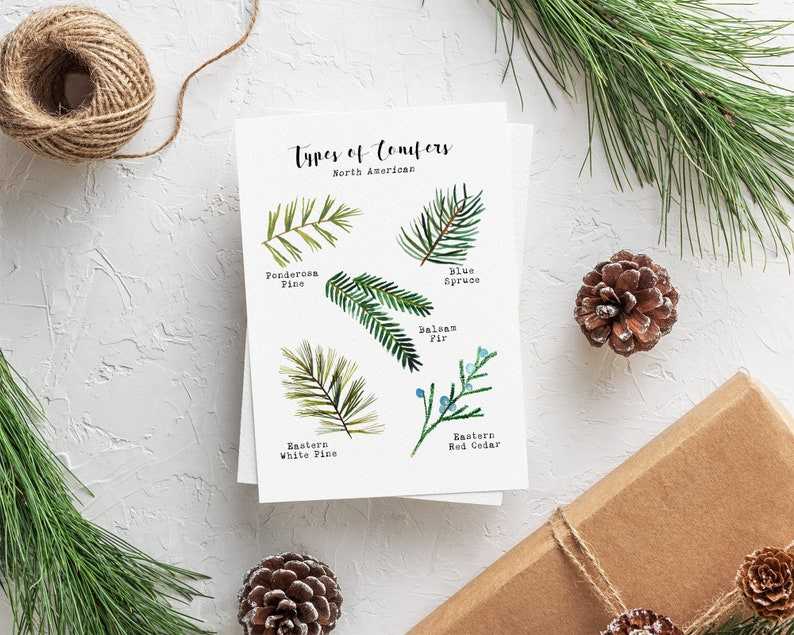 Types of Conifers Card Set  Boxed Christmas Cards  image 0