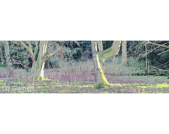 Contemporary Landscape Photograph of Gorham Wood, Hucking, Kent, United Kingdom