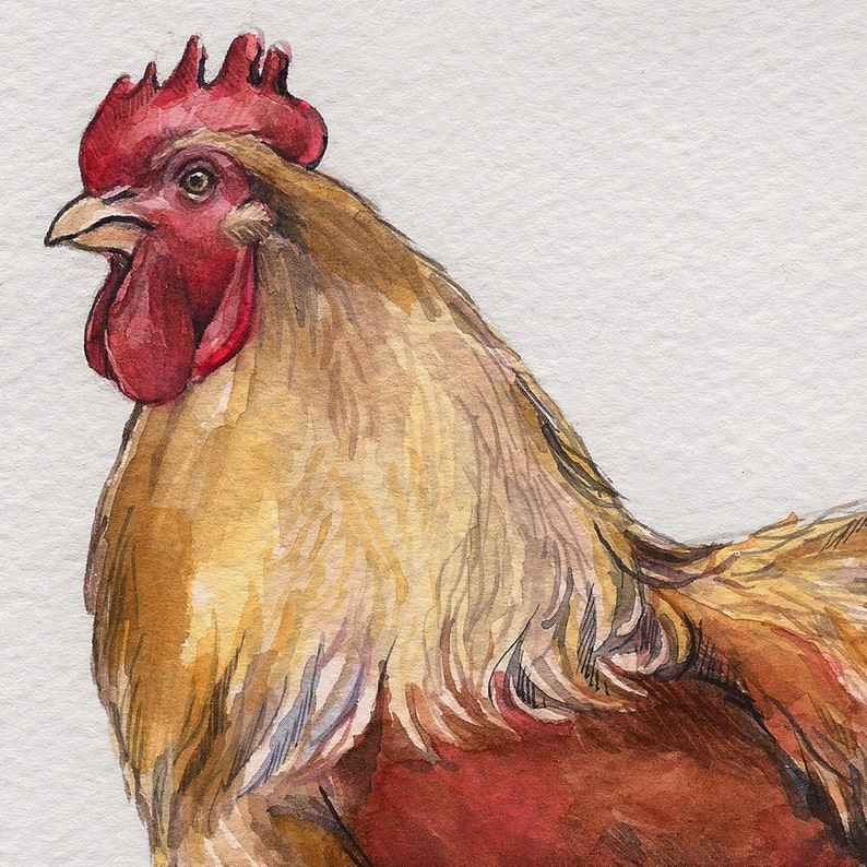 Buff Cochin Rooster print image 0