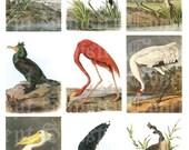 Audobon Water Fowl Digital Sheet