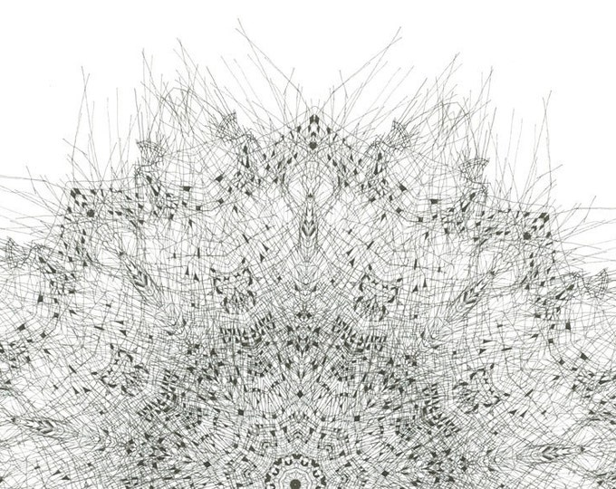 """Forms found in nature - 12"""" x 18"""" print"""