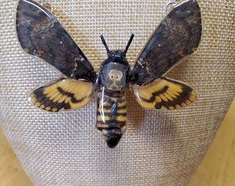 REAL Death's Head Sphinx Moth