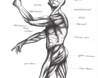 Cross-Hatching Art Drawing Anatomy Lesson Video - Waldorf