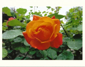 Rainy Day Rose Photo Note Cards - Set of TEN