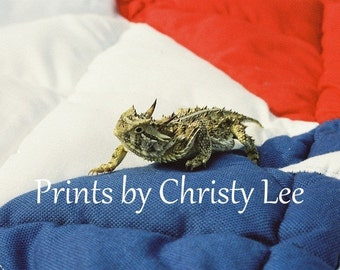 Horned Toad with Texas Print