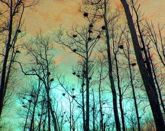 Color Photography Heron Heights 11x14 Gold Copper Aqua Teal Black Woodland Print Wall Art Home Decor