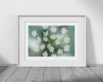 Flowerburst - Flower Photography, Floral Decor, Floral Art, Sea Green, White, Aqua, Macro, Simplicity, Minimal, Dawn Blanchard Photography