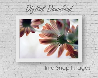 Reaching for the Light - Flower Photography, Flower Decor, Digital Download, Instant Download, Decor Printable, Printable JPG, PDF, Daisies
