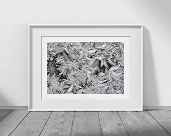 Frosted - Winter Photography, Frost Patterns, Ice, White Decor, Winter Decor, Christmas Card Photos, Winter Images, Winter Download, JPEG