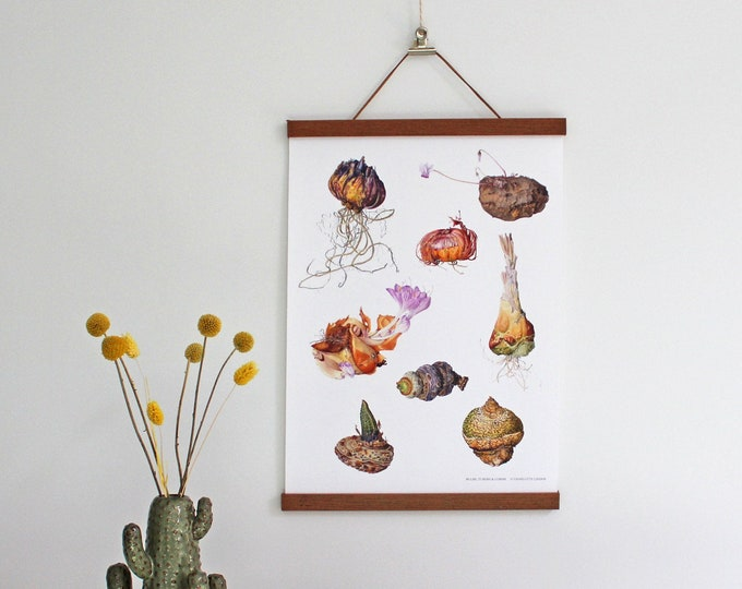 Featured listing image: Poster with Bulbs, Tubers and Corms Illustrations