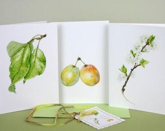 Note card set-plum illustration-leaf print-plum flowers card-Syston white plum-botanical cards-gift for mothers-fruit illustration card set