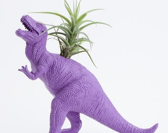Dinosaur Planter with Air plant- Dorm Room Geekery Decoration, Purple Plant Pot