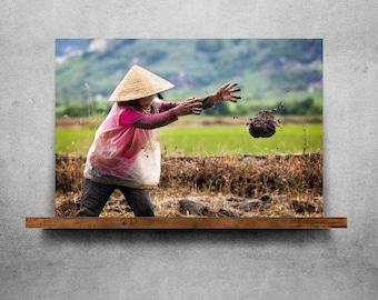 A woman in a field in Vietnam — Fine Art Print, Canvas/Metal/Acrylic/Framed