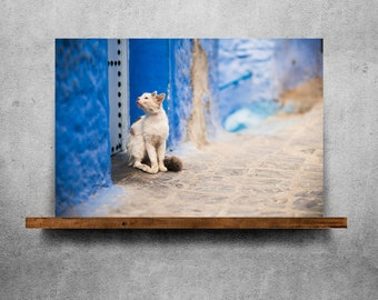 White cat and a blue wall — Fine Art Print, Canvas/Metal/Acrylic/Framed