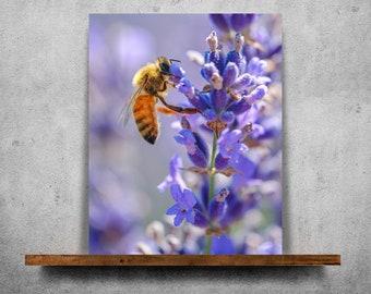 Bee on lavender — Fine Art Print, Canvas/Metal/Acrylic/Framed