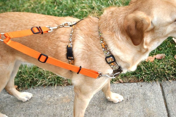 picture of dog with harness and leash