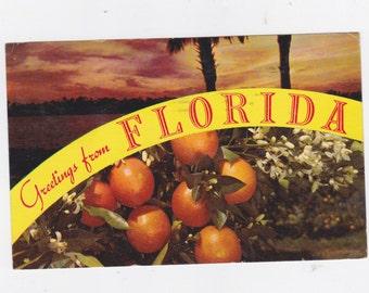 Vintage 1966 post card greeting from Florida Panama City Florida
