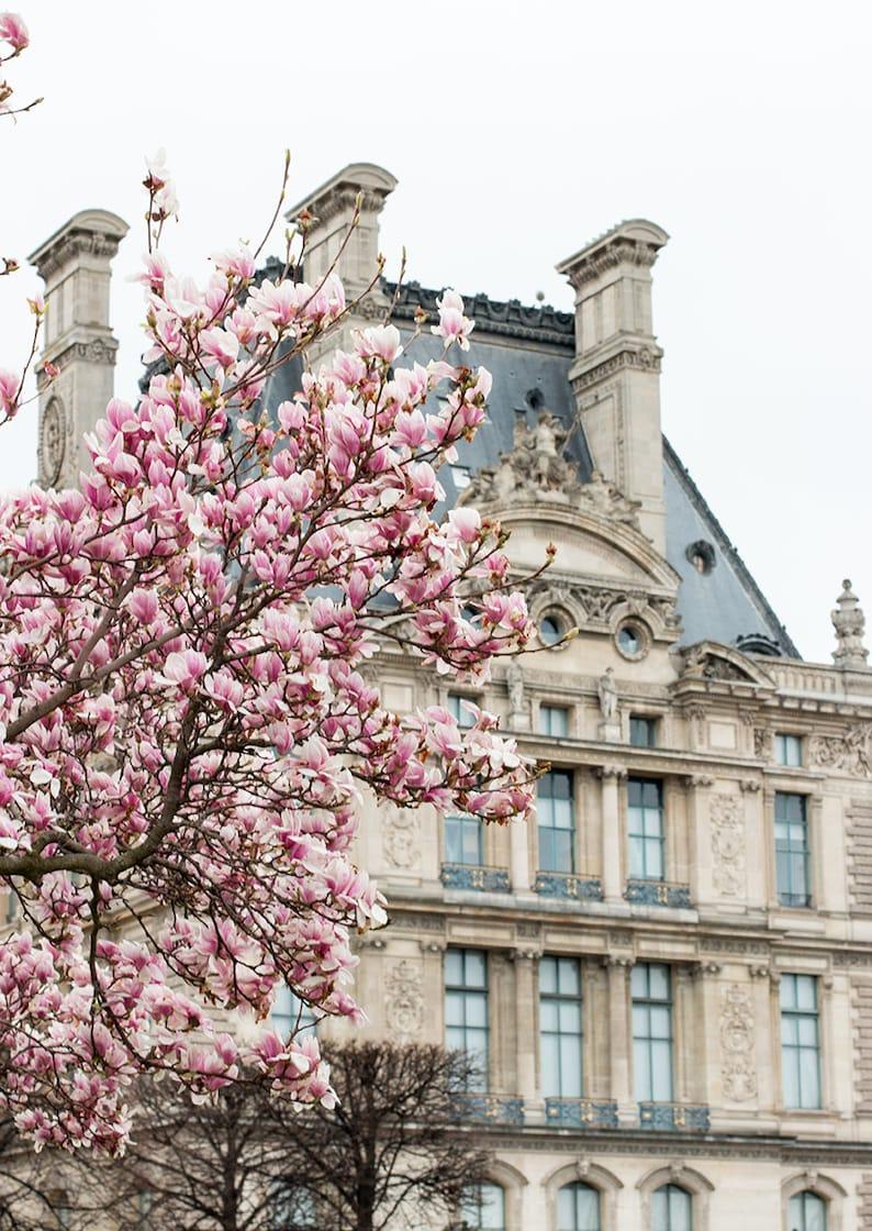 Paris Photography Magnolia Season in Paris Paris in the image 0