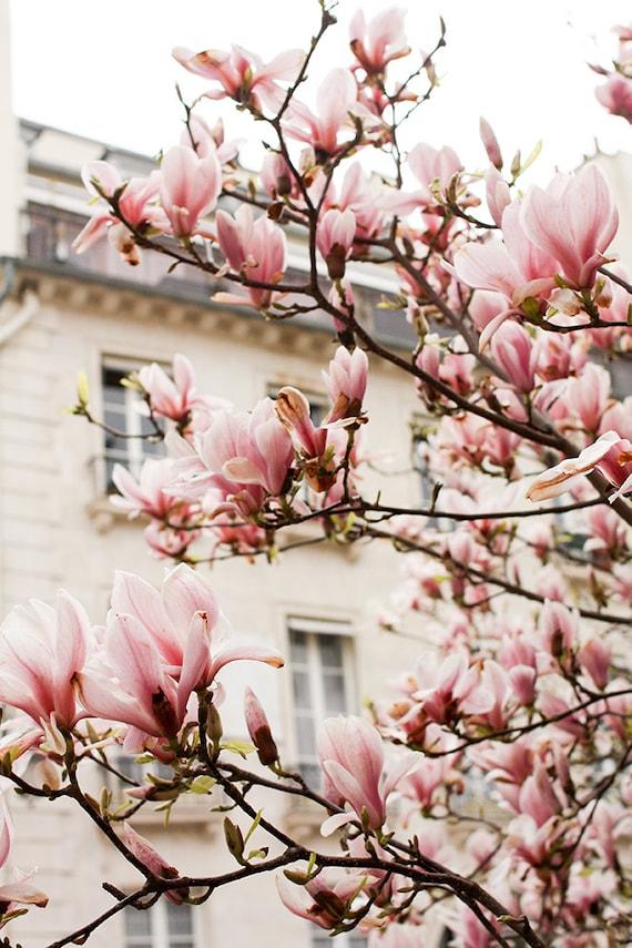 Paris Photography Pink Magnolia Trees In Paris Paris Home Etsy