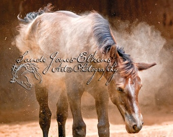 Shake it Baby, 11x14 inch Equine Photography