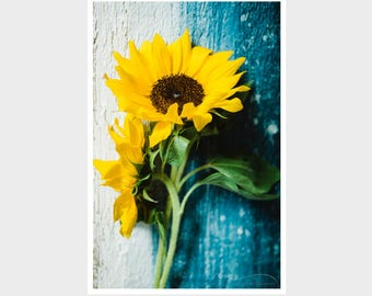 sunflower photograph, sunflower print, flower photograph, nature photograph, farmhouse decor, nursery wall art, rustic kitchen decor