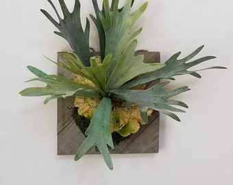 Large mounted staghorn, faux, artificial plant, boho wall decor