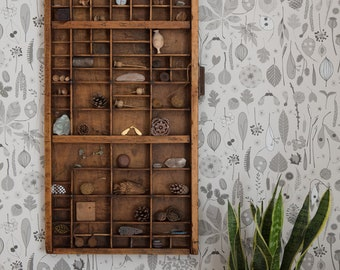 Tiny Treasures wallpaper in 'dove' by Hannah Nunn, a botanical wall covering for collectors of seeds, pods and nature's treasures