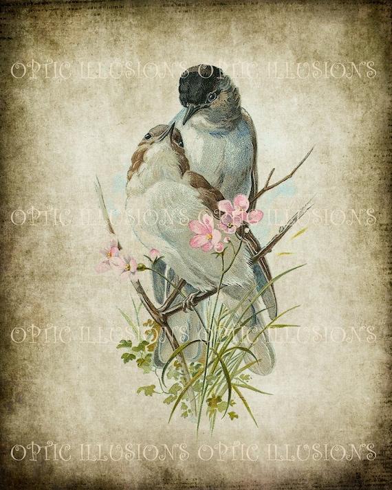 Ilustraciones vintage de pájaro en papel viejo Ave 10 8 x | Etsy