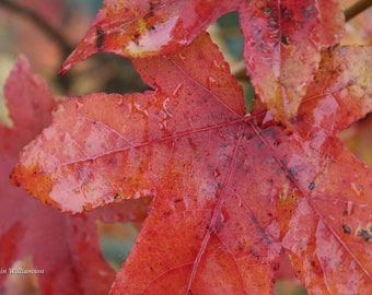 Dewy Autumn Morn—Photo Print or Canvas Gallery Wrap