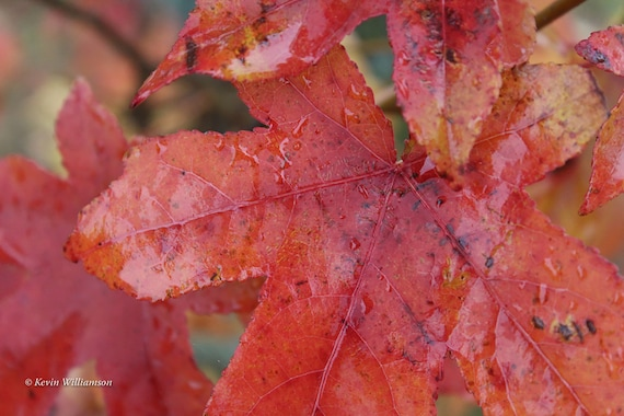 Dewy Autumn Morn—Photo Print or Canvas Gallery Wrap