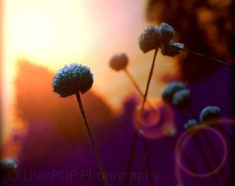 Dreamy Landscape Fine Art Photograph Print