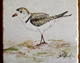 "Piping Plover Stone Coaster 4x4"" Giclée Print @ Cédian Painting"
